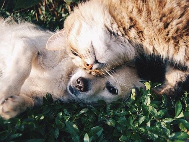 Erfahrungen Tierfutter & Tierzubehör Test