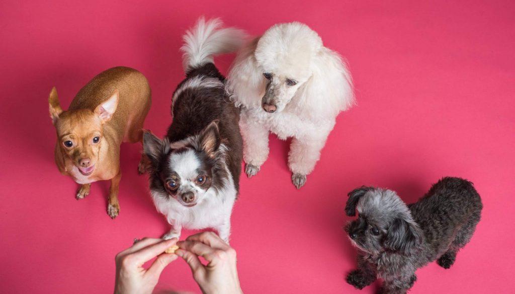 erfahrungen mit hundefutter futtermarken im Test und Vergleich Bild